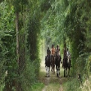 Horse riding and promenades