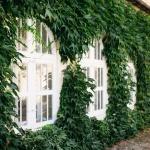 exterieur orangerie lierre plante